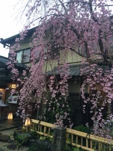 桜京都3 (600x800)