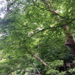 初夏の京都へ