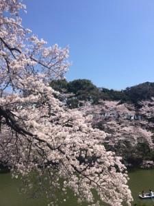 桜20153 (600x800)