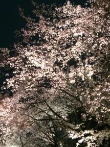 桜京都4 (600x800)