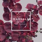 秋の流行色・マルサラ