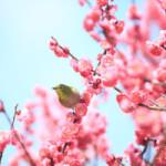 立春を迎えて☆2015
